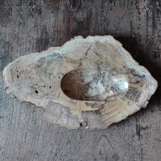 petrified wood vide-poche